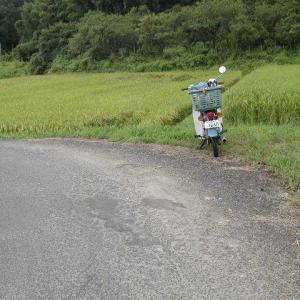 ツヨピシと一緒に、バイクで田んぼに落ちました。