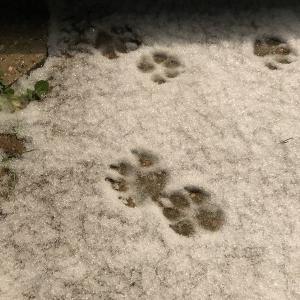 雪の降る日に起こった大変な事…
