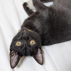 10月譲渡会参加CAT