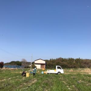 淡路島の大村農園さんであま~い玉ねぎの収穫してきました!!