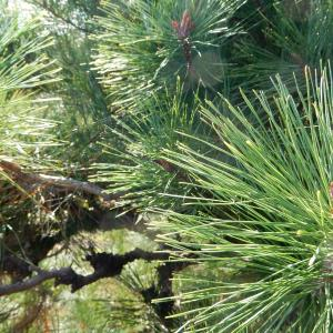 【 熊谷市・東松山市・行田市 】今年最後のブログを更新!来年も植木のことは長谷川植木屋まで♪