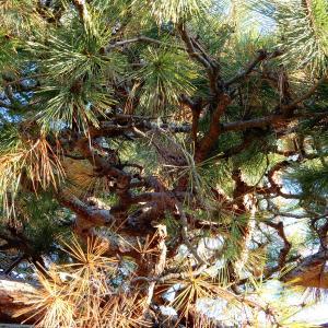 【 熊谷市・東松山市・行田市 】枯れてしまった植木の処分はどうしたらいいのか??