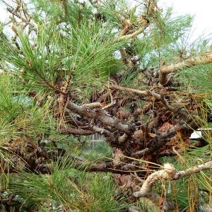 【熊谷市・東松山市・行田市】庭木の伐採の費用が高額になってしまう理由2点!