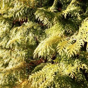 【行田市の植木屋】植木の剪定・伐採費用をできるだけ安くしたいとお考えの方必見!長谷川植木屋まで!