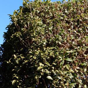 【 熊谷市・東松山市・行田市 】面倒な庭木の剪定・伐採を低価格で何とかしたいとお悩みのあなた!
