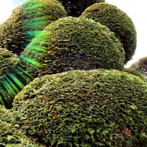 【埼玉県行田市・熊谷市】庭木の伐採を安く済ませたいそんなあなたに長谷川植木屋がおすすめ!