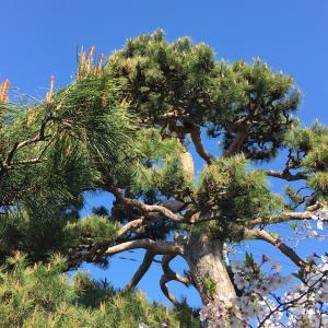 【熊谷市・羽生市・東松山市】長谷川植木屋は非接触型で庭木の剪定・伐採の依頼が可能です!