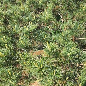 【行田市・東松山市・羽生市】安く植木の剪定・伐採をしたいと思う方はまずはネットで検索!!