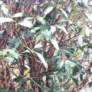 【行田市・羽生市・東松山市・加須市】安く植木の枝おろしをしたい方必見!!枝おろしの大切さとは
