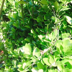 【行田市・羽生市・東松山市・加須市】空き家の枯れた植木は伐採すると防犯対策になるのか?