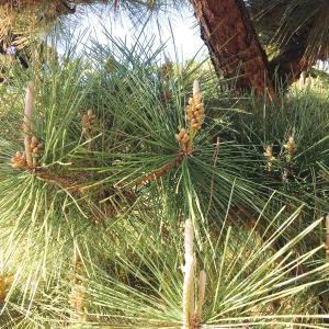 【行田市・羽生市・東松山市・加須市】空き家の庭木を安く枝おろしをして維持管理を簡単に?