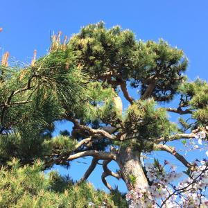 【行田市・鴻巣市・羽生市】大きくなってしまった空き家の植木を安く剪定・伐採をしたい方必見!
