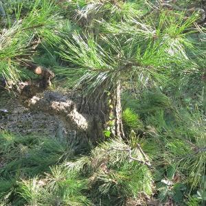 【行田市・羽生市・東松山市・加須市】空き家の植木を安く簡単に維持管理をしたいそんな方へおすすめ