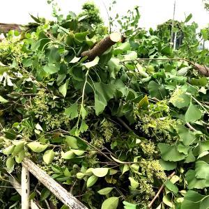 【行田市・羽生市・熊谷市・東松山市】リモートで植木の剪定・伐採の予約を取れるのは長谷川植木屋