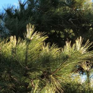 【行田市・羽生市・東松山市・加須市】大きくなってしまった植木を小さくこじんまりとしたい方必見