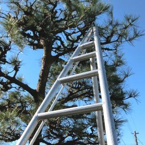 【行田市・羽生市・東松山市・加須市】庭の植木は屋根より低くしておくことをおすすめする理由とは