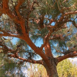 【埼玉県羽生市】植木の高さは屋根より低くすることをおすすめしているのはなぜか?植木屋が詳しく解説
