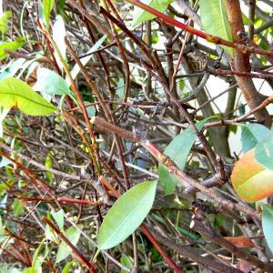 【行田市・羽生市・東松山市・加須市】植木の剪定を自分でやるメリット・デメリットについて簡単に解説