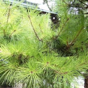 【 熊谷市・東松山市・鴻巣市 】これが現実!? 植木の消毒をしないとこういうことになるという結果