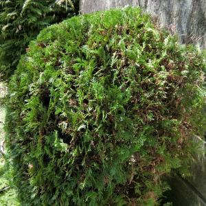 【 熊谷市・東松山市・鴻巣市 】空き家の庭木は伐採がいいのか?? それとも剪定がベストか??