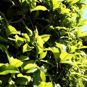【 熊谷市・東松山市・行田市 】植木屋が解説!空き家の植木放置はどれくらいの期間が限界なのか??