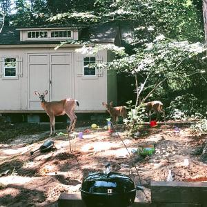 また森のお庭に、鹿の親子が遊びに来た♡