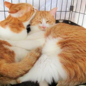 双子猫団子