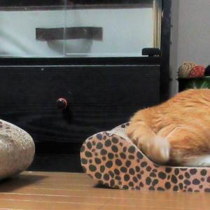 シンクロ双子猫