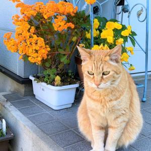 5月の庭と猫