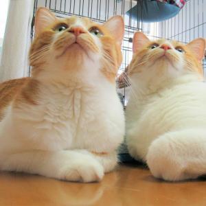 猫柄クーラーバッグ