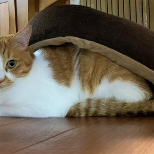 オリオン座と猫