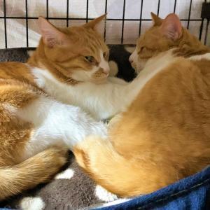 猫団子と三度笠