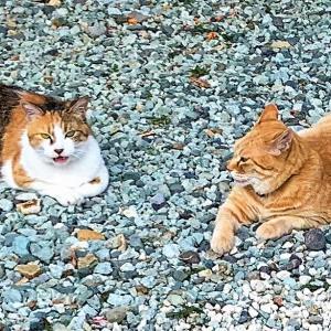 夕涼みする親子猫