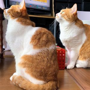週末の双子猫