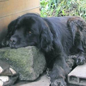【セラピー効果?犬との生活で長生き:ダイエットや生活習慣病予防にもなりそう】
