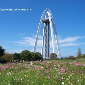 138タワーパークのコスモス