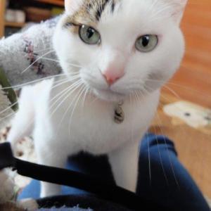 うちのユズが野良猫になってたら…と思うとゾッとする
