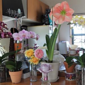 胡蝶蘭、バーク植えで失敗しない方法