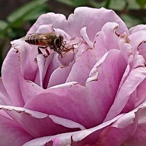 中に蜜がいっぱいあるの・・・・