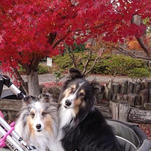 紅葉とシェル