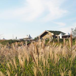 ハヌル公園/하늘공원