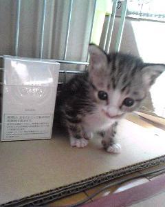 2月22日はネコの日♡猫といられる幸せ