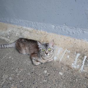あるノラ猫のおはなし③
