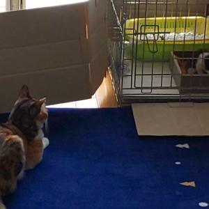 仔猫をガン見するネコ