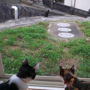 【黒猫ちゃん】迷いねこ確定