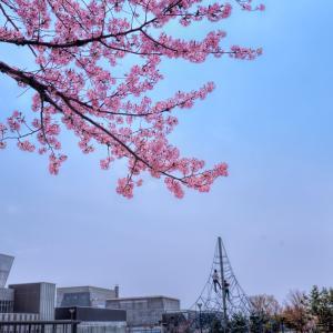 いつもと変わらない春の風景