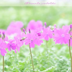 今日の1枚 癒しの花