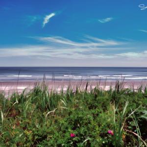 季節がめぐってふたたび海の時間