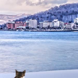 冬の寒さ緩んで猫背治る