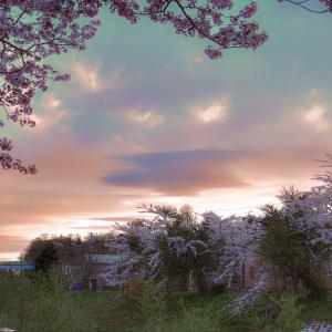 桜の季節は過ぎたけど